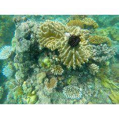 Great Barrier Reef.  #Coral #Cairns #GreatBarrierReef #GoPro #ScubaDiving #Snorkelling #Beautiful #WonderOfTheWorld #HeritageSite #QLD #TNQ #Adventure #Australia #Travelling by ltindz http://ift.tt/1UokkV2