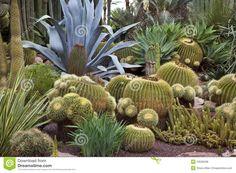 Cactus Garden - Elche - Spain Royalty Free Stock Photos - Image: 19509338