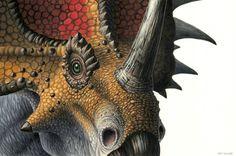Styracosaurus by EsthervanHulsen.deviantart.com on @DeviantArt