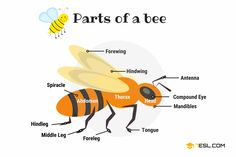 Animal Body Parts Vocabulary in English (with Pictures) - 7 E S L Learn English For Free, Learn English Grammar, English Vocabulary Words, English Language Learning, English Writing, English Study, Speech And Language, Body Parts Preschool, Animal Body Parts