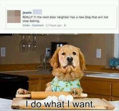Baking Dog