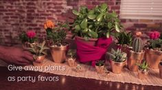 DIY Gold-Leafed Potted Plants