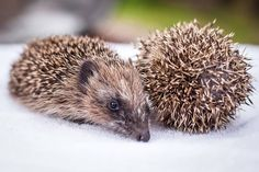 hedgehog  JOINING PAWS EVENT FOR ALL CREATURES BIG AND SMALL  Joining Paws is the first of hopefully many events and is organised by Lex's Legacy and Hallswood Animal Sanctuary.  3rd of October 2015