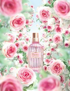 L`Occitane en Provence Roses et Reines ~ New Fragrances