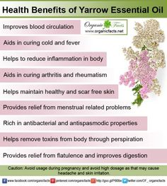 The health benefits of Yarrow Essential Oil can be attributed to its properties like anti inflammatory, anti rheumatic, anti septic, anti spasmodic, astringent, carminative, cicatrisant, diaphoretic, digestive, expectorant, haemostatic, hypotensive, stomachic and tonic.