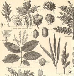 plants with tannins - Yahoo Image Search Results