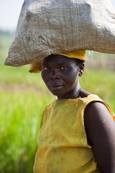 Lendu woman carrying cassava, Ituri distirct, Democratic Republic of Congo