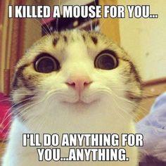 Braaaves Kätzchen, deine Ideen halten dich am Leben
