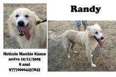 RANDY, un angelo bianco in cerca di casa http://adottauncaneanziano.blogspot.it/2012/12/randy-un-angelo-bianco-in-cerca-di-casa.html