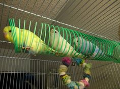 slinky budgies. In my estimation this is a brilliant idea.