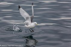 Water jumper by Antero Topp