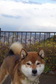 めまぐるしく変わるお天気|めろんオフィシャルブログ「柴犬めろんの日記」Powered by Ameba