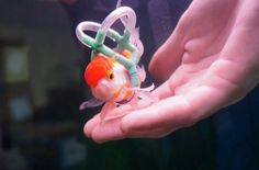 fish lifejacket 1 Daaaw Owner Makes Lifejacket For Pet Fish Called Einstein Who Cant Swim