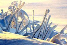 Snön har kommit till Tornedalen i Lappland - Travel Pello, Lappland Finland Finland Travel, Arctic Circle, Travel Destinations, Northern Lights, Winter, Painting, Finland, Lapland Finland, Winter Snow