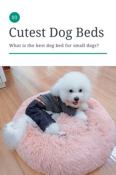 We took a look through dozens of dog beds to identify the best of the best. We looked through different options and weighed them based on comfort, features, build, materials, and other features we viewed as essential to a quality dog bed. We also sorted them by our favorites, ones that are more budget-friendly, some of the best orthopedic beds, and more. We'll break down what you need to know about each bed so you can make the best decision for your dog.