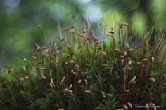 MacroPhotography.com - Evening Moss - Forest Collection by Damon Clarke. Fine Art Macro Photography Prints and Interiors.