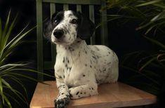 Studio, Dogs, Animals, Animales, Animaux, Pet Dogs, Studios, Doggies, Animal