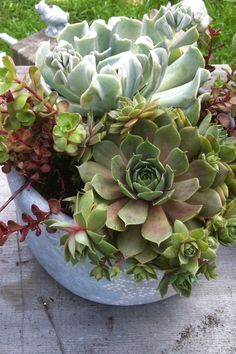 My first attempt at container gardening with succulent plants.