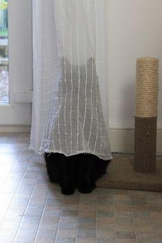Find The Cat - Via Adote Um Gatinho