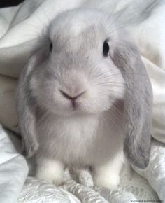 Bunny wabbit.  I'm so cute with my floppy ears (in case you didn't notice my cuteness!)