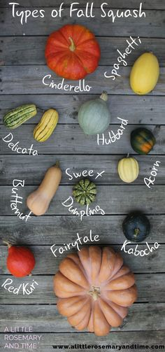 Types of Fall Squash and How to Use Them! - A Little Rosemary and Time