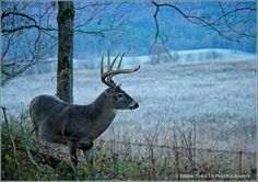 Pure and illusive. What beauty God created for our enjoyment as hunters. Thank you Lord.