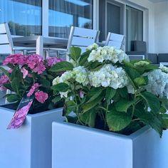 Színes virágok és a formatervezett növénytartók élettel telivé teszik a legegyszerűbb teraszt is! 🌿🌷🏡 #növénytartó #kaspó #virág #inspiráció #kulsoepiteszet #kert #kertdesign #terasz #városioázis #varosikert #kertateraszon #kertészkednijó #városikert #lakberendezés Vegetables, Plants, Vegetable Recipes, Plant, Veggies, Planets