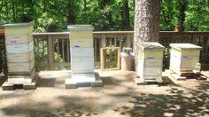 Linda's Bees: It's time to Name the Hives