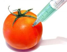Disadvantages of Genetically Modified Foods