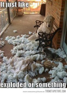 "Been there, done that. Except it was a down-filled pillow that Tori (my rat terrier) ""exploded"" over a vent inside the house at 11 pm one night. It took 2 days to get all of the feathers out of the house."