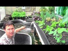 What is Aquaponics? How it Works & Tips for Running an Aquaponic Setup.
