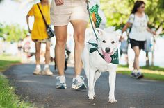 Magic Island will be crawling with furry friends starting at 7 a.m. Sunday, Oct. 11, for Hawaiian Humane Society's 25th annual PetWalk