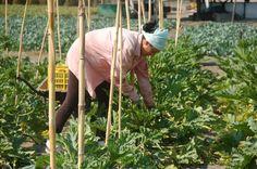 I contadini, i loro prodotti e i loro volti. Senza di loro tanti chef non potrebbero più fare le star ambite e essere sempre presenti su fb