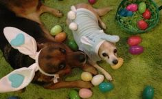 Training your dog to hunt for his own special eggs filled with stinky treats is fun way to enjoy the holiday -- and a great introduction to scent work.