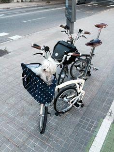 Happy going around in his Valeria's fashion bag for Brompton! Brompton, Bike Accessories, Fashion Bags, Motorcycle, Happy, Fashion Handbags, Biking, Motorcycles, Motorbikes