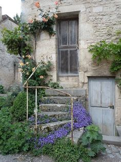 campanula on steps, or so it seems to be