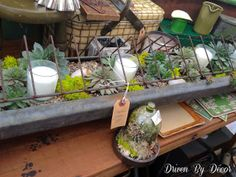 Chicken feeder filled with succulents and candles - would make a fabulous centerpiece!