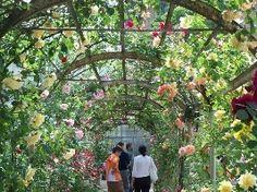 Orto Botanico UNIVERSITA' DI PAVIA - Pavia