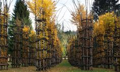 The Tree Cathedral by Italian artist Giuluano Mauri. The weaving of more than 600 chestnut and hazel branches around 1,800 fir tree poles creates a form of 42 columns. After each of the columns deteriorate, a single beach tree – planted inside each column – will outgrow the structure and create a natural wall and roof. In just a few more years, the end result will be a Gothic-like cathedral make entirely of trees.
