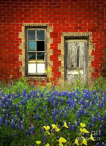 Texas Photograph - Beauty And The Door - Texas Bluebonnets Wildflowers Landscape Door Flowers by Jon Holiday