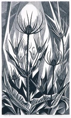 Teasels - wood engraving - Monica Poole, U. Illustrations, Illustration Art, Linocut Prints, Art Prints, Block Prints, Wood Craft Patterns, Black White Art, Encaustic Painting, Wood Engraving