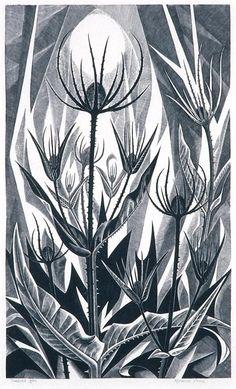 ArtistMonica Poole (Born 1921) TitleTeasels MediumWood engraving