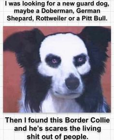 Hot wrapper in the guise of a dog - 9GAG