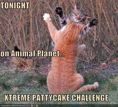 xtreme pattycake challenge