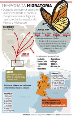 Alistan corredor ecológico para proteger a la mariposa Monarca - Grupo Milenio Monarch Butterfly Migration, Spanish Projects, Spanish Teaching Resources, Spanish Class, Good Mood, Science And Technology, Mason Jars, Places To Visit, Tatoos