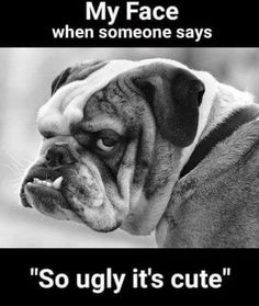 Gorgeous bulldog == I don't care what anyone says, he's adorable! Charles Darwin, Bulldog Puppies, Dogs And Puppies, Bulldog Mascot, Dog Pictures, Animal Pictures, Bulldog Quotes, Funny Animals, Cute Animals