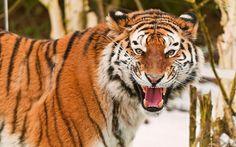 animal background desktop free