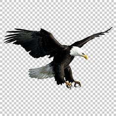 This PNG image was uploaded on February pm by user: Murph_adam and is about Accipitriformes, Animal, Animals, Bald Eagle, Beak. Black Background Photography, Photo Background Editor, Photo Background Images Hd, Studio Background Images, Eagle Background, Background Wallpaper For Photoshop, Desktop Background Pictures, Pics Art, Image Hd