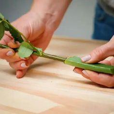 Regrow Vegetables, Planting Vegetables, Growing Vegetables, Flora Garden, Fruit Garden, House Plants Decor, Plant Decor, Growing Flowers, Planting Flowers