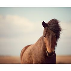 Horse Photography, Nature Photography, Rustic Farmhouse Decor, Large... ($30) ❤ liked on Polyvore featuring home, home decor, wall art, photo wall art, photography wall art, photographic wall art, horse wall art and horse home decor